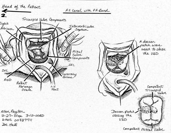 Payton's Medical Illustration